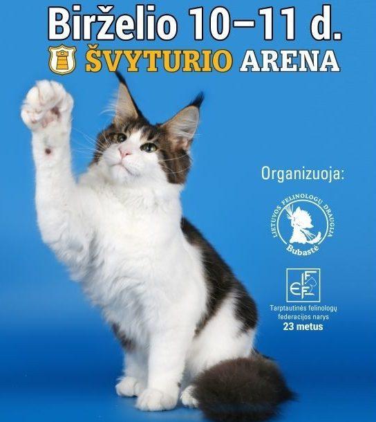 """Tarptautinė kačių paroda """"BALTIC WINNER SHOW"""""""