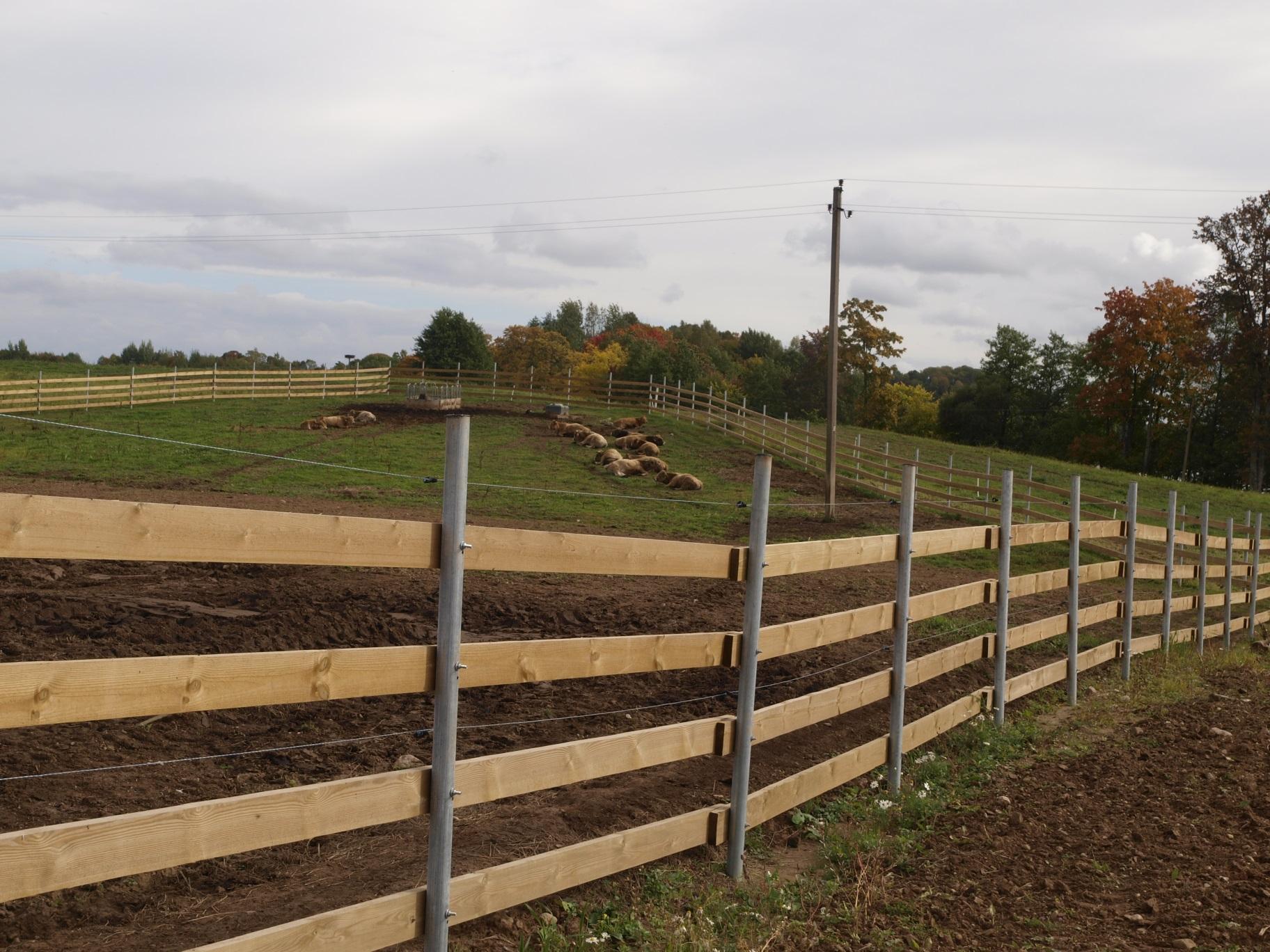 Pieno ūkiai Lietuvoje traukiasi, bet kai kas nespėja spausti sūrių