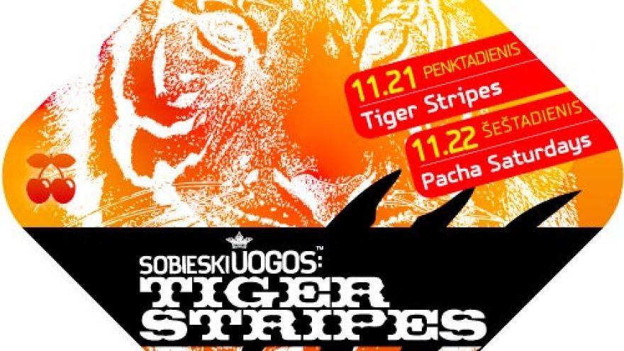 SOBIESKI UOGOS™: Tiger Stripes (Pacha)