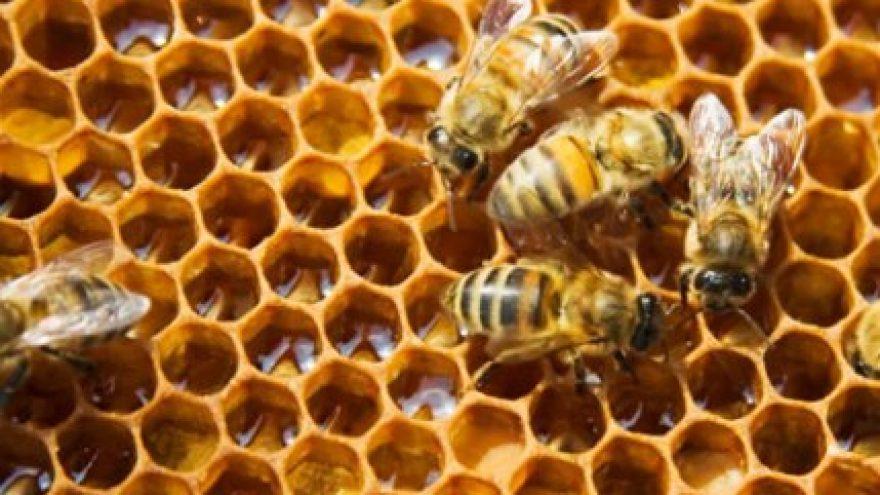 Trakų bitininkų šventė