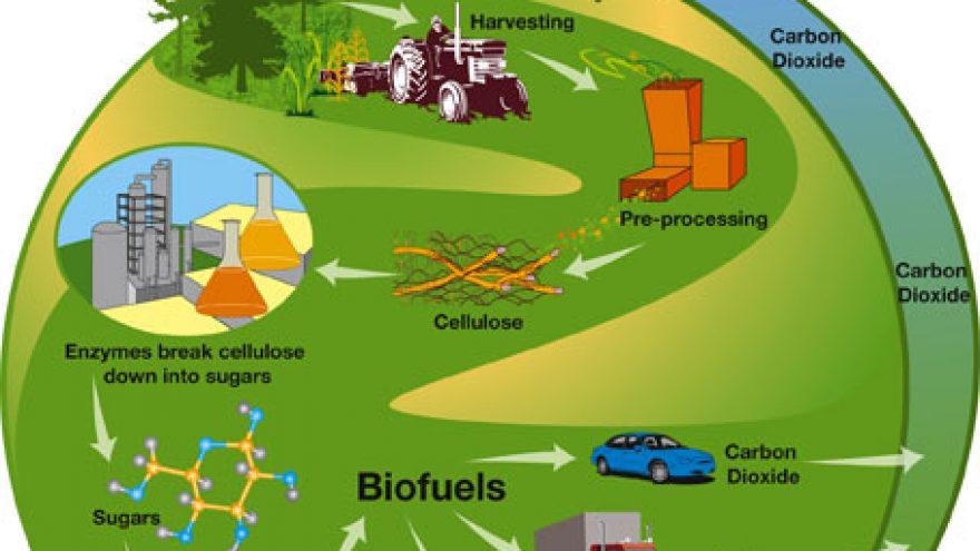Biomasė – ateities kuras!?