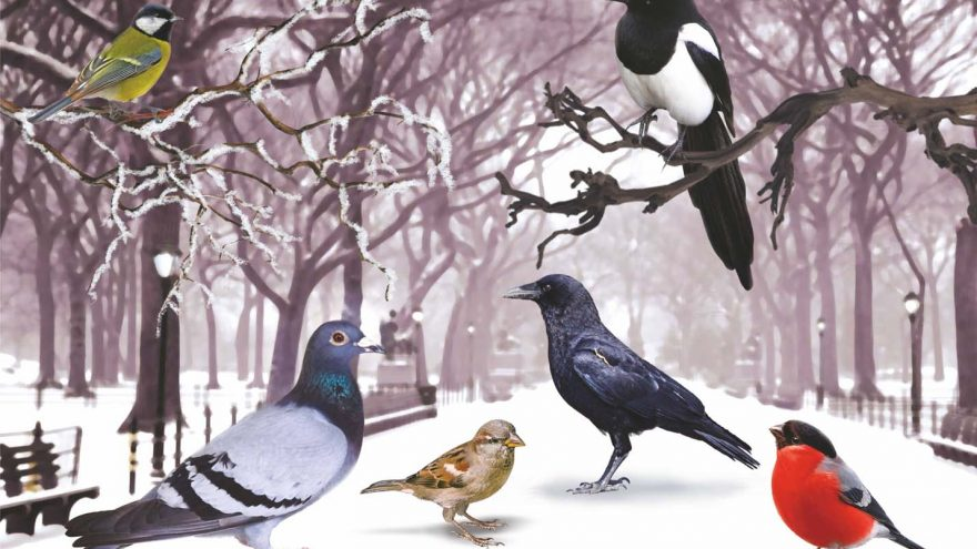 """Šventinis spektaklis vaikams """"Naujametė paukščių dingimo istorija"""""""