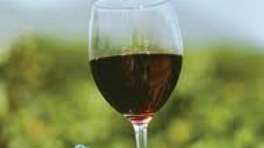 Vynuogių dvikova: Cabernet Sauvignon prieš Merlot