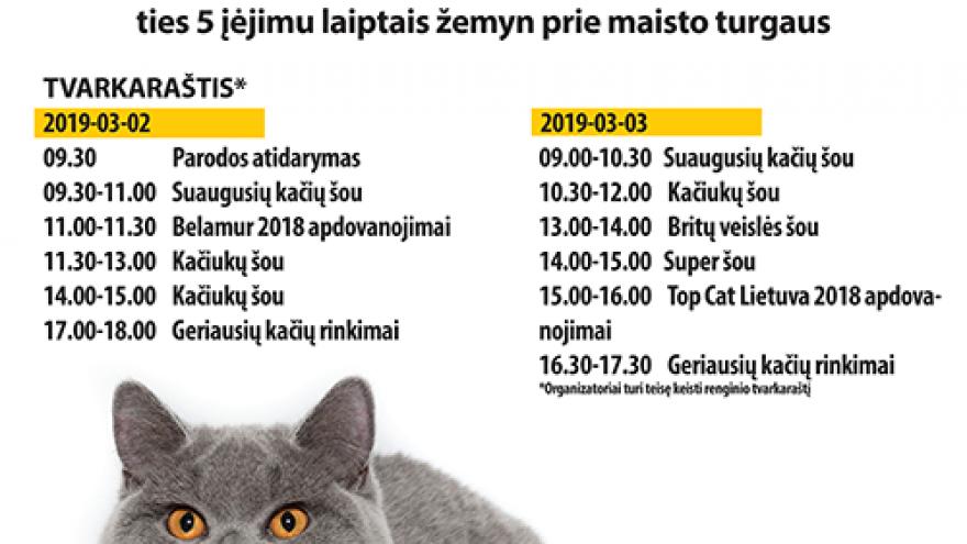 Tarptautinė kačių paroda Vilniuje