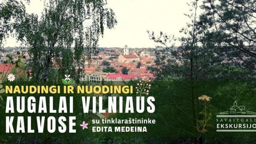 Naudingi ir nuodingi augalai Vilniaus kalvose