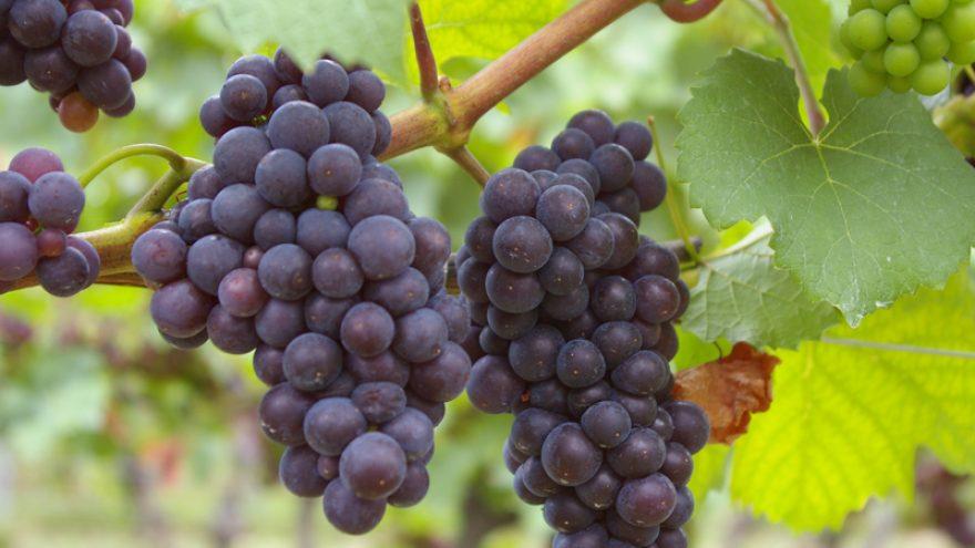 """Tempranillo vynų degustacija viešbutyje """"Daugirdas"""""""