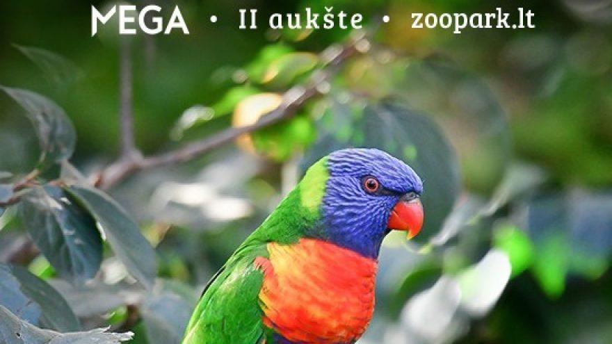 Apsilankyk edukaciniame zoologijos sode ZOOPARK.LT | KAUNE