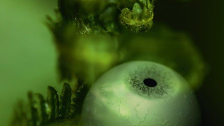 BIOTOOPIA – Kunsti, teaduse ja biosfääri konverents / 1-päeva pääse / 1-Day Pass 27.08