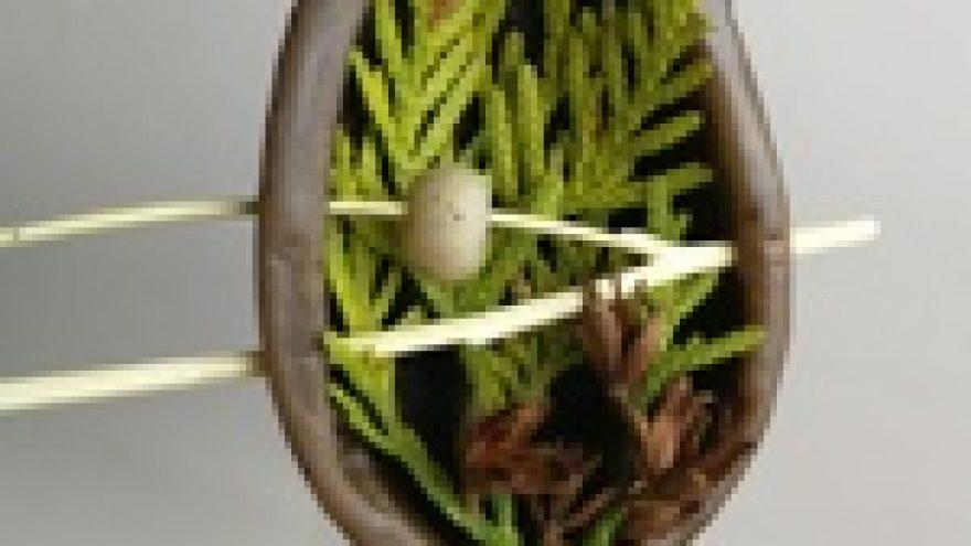 Velykinių kiaušinių-dekoracijų iš kavos tirščių gamyba