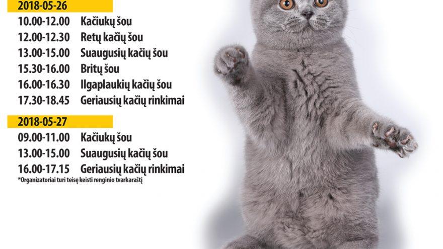 Tarptautinė kačių paroda Klaipėdoje